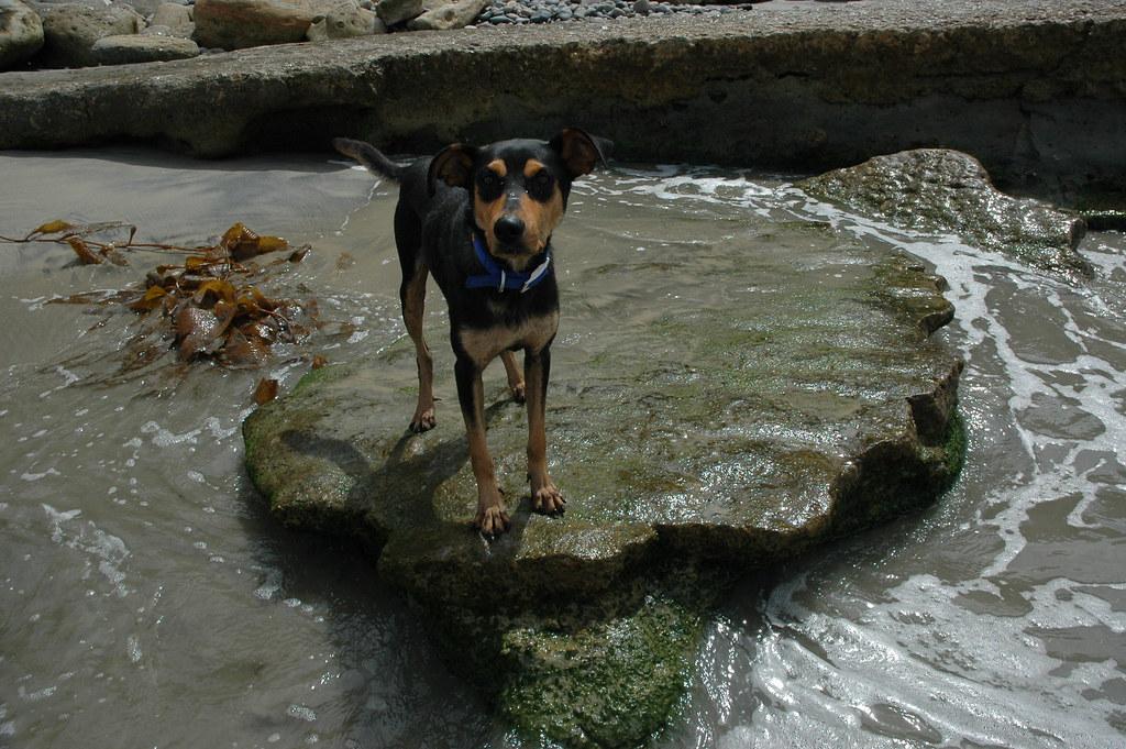 Dog Beach Near Panama City Fl
