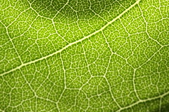 Leaf Structure | by pasukaru76