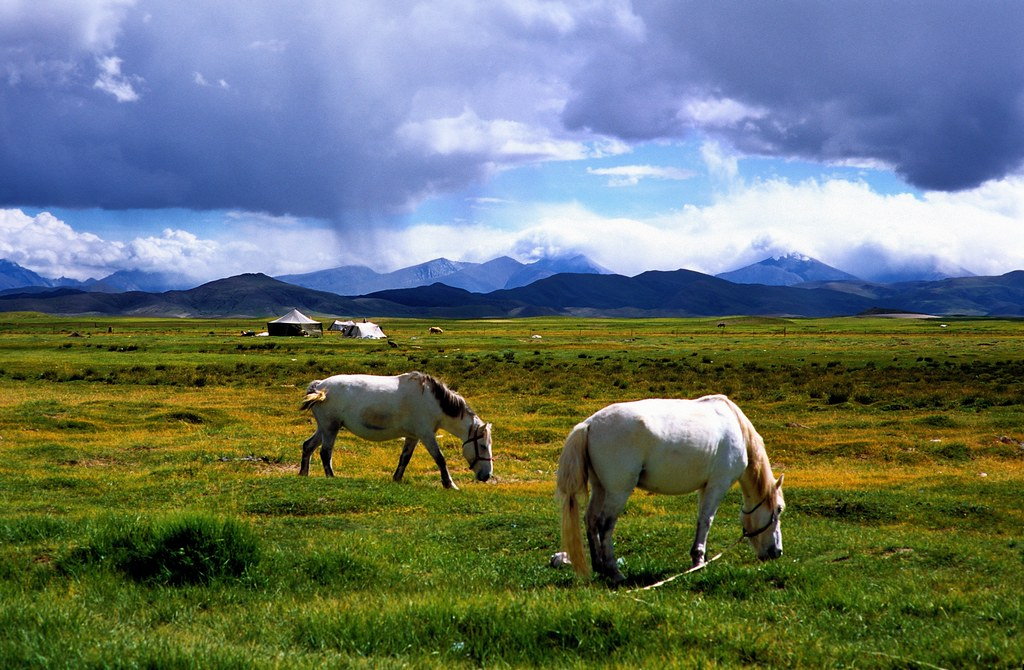 Horses Landscape Outside Baryang View Large On Black