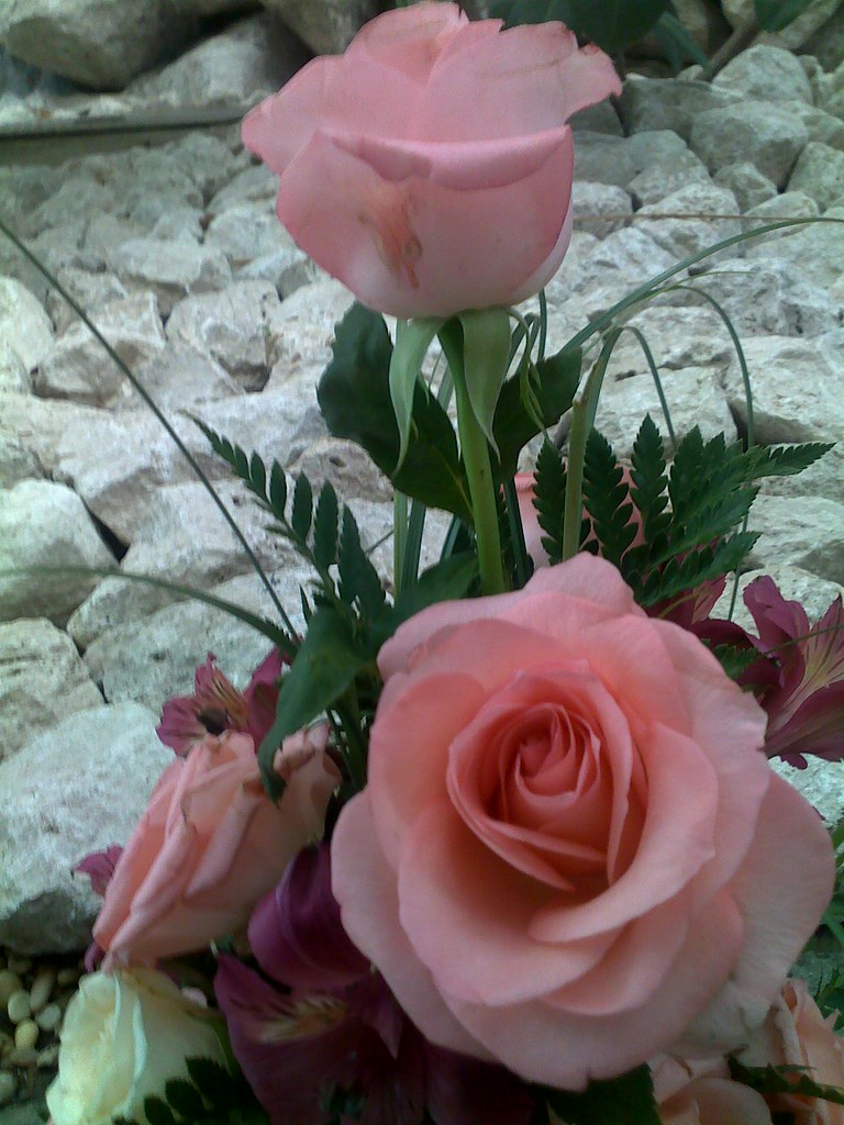 Très Queste rose sono x TERESA GUZZI CON I MIEI AUGURI DI BUON … | Flickr IA51