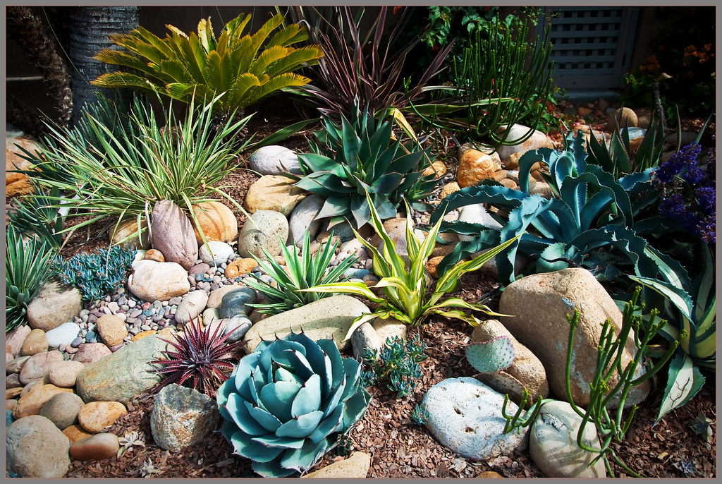 Rock Garden With Succulents Low Water Can Be Lovely