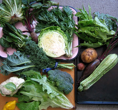 our half of our csa haul | by you can count on me