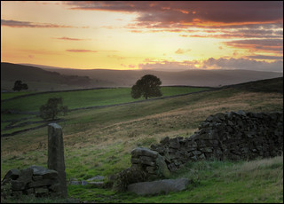 Evening light | by BingleymanPhotos