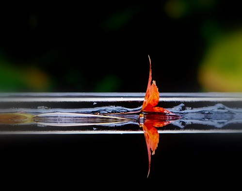 Leaf on Water 02 | by Michael Whyte