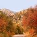 Autumn Road. . .