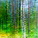 Mixed forest paint