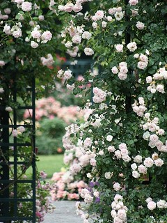 The Peggy Rockefeller Rose Garden | by donsutherland1