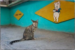 Butcher's Cat, Havana, February 11, 2017 | by Maggie Osterberg