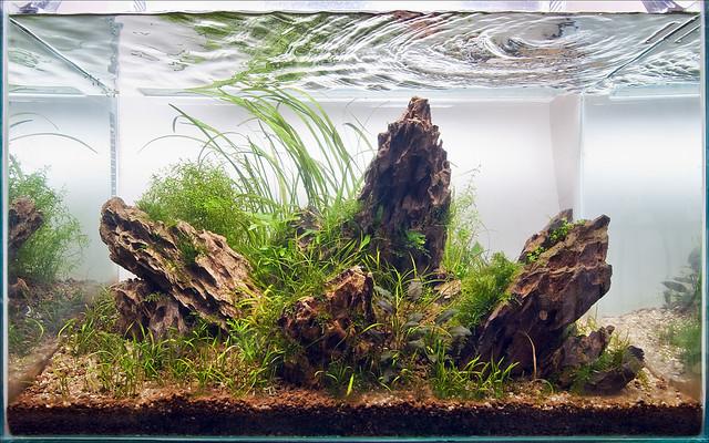 My 60cm Red Cherry Shrimp Planted Iwagumi Aquarium 4 6 2