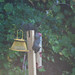 Squirrel Discovers the Bird Feeder