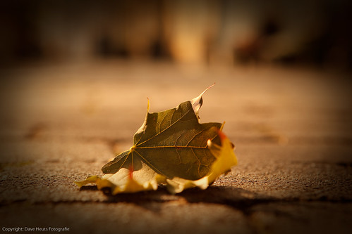 Lonely leaf left alone | by Dave Heuts