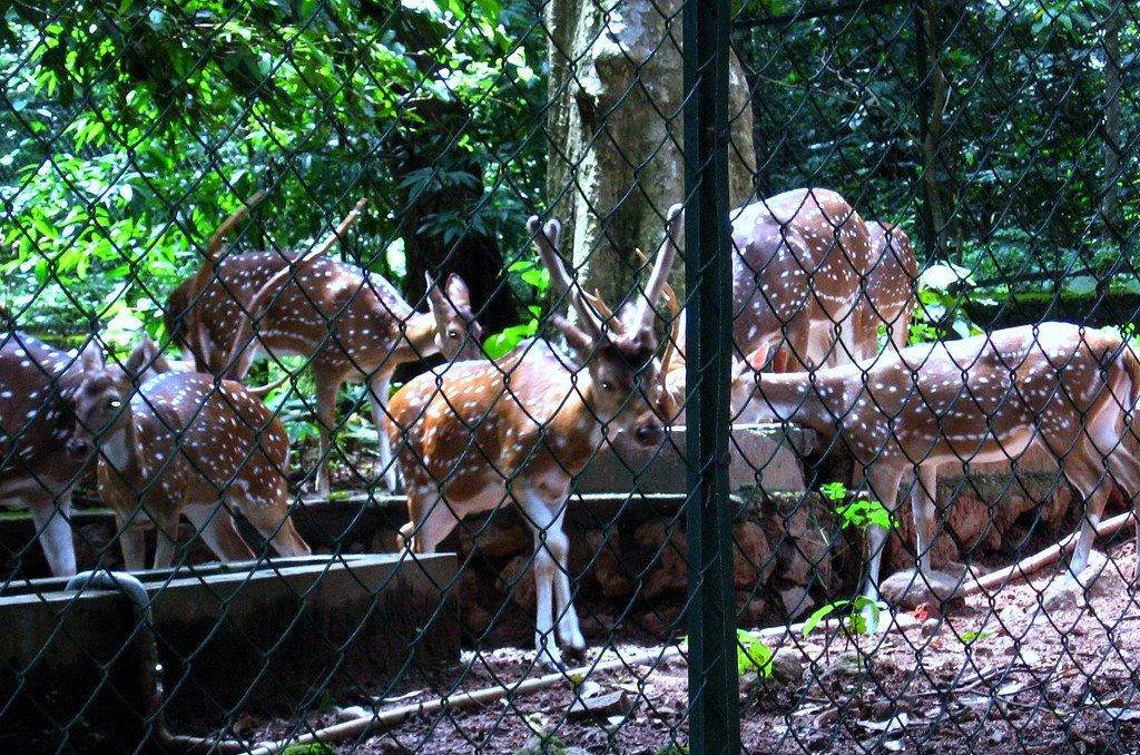 Deer Park Thenmala Kerala We Were Lucky To Spot And