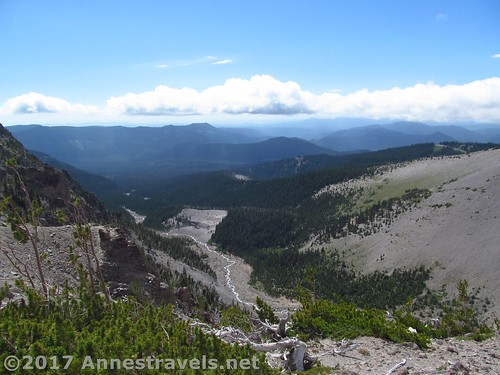 Views down Newton Canyon from Gnarl Ridge, Mt. Hood National Forest, Oregon