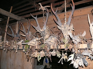 Deer and primate skulls | by East Asia & Pacific on the rise - Blog