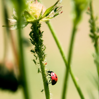 MWAHAHAHAHAAA THERE IS NOWHERE TO HIDE APHIDS | by harold.lloyd