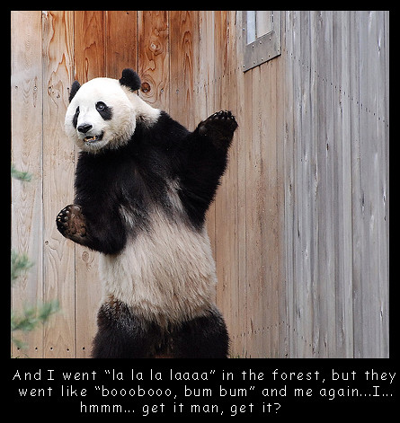 panda bear see more cute and funny animal pictures flickr