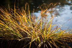 sunset grass | by andykee
