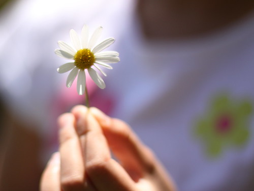 fresh as a daisy | by jenny downing