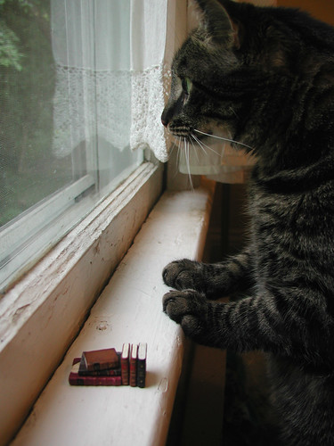 tiny books - cat checked and cat approved | by graceewhite