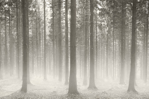 Polish Forest | by Ben Heine
