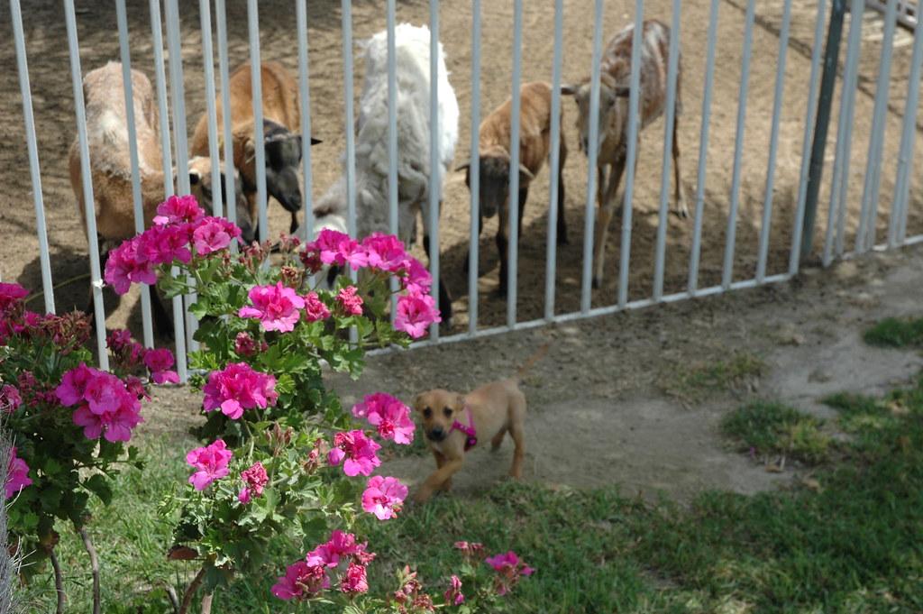 Dog Friendly Hotel Near Channelview Tx