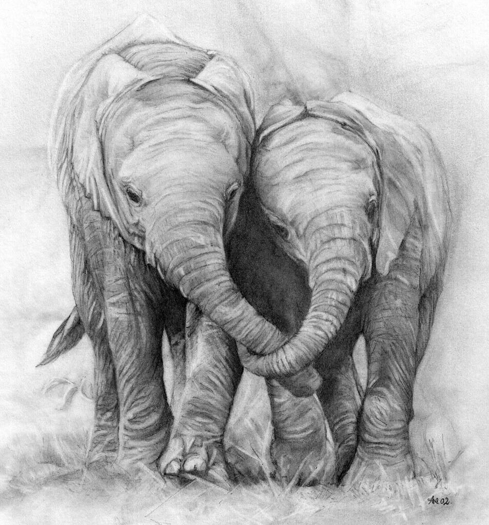 Elephants. Pencil drawing | Although poaching of elephants ...