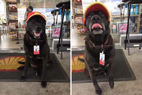 abandoned-dog-gas-station-employee-negao-brazil-4