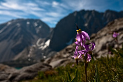 Flowers and mountain peaks | by Richard Bolt