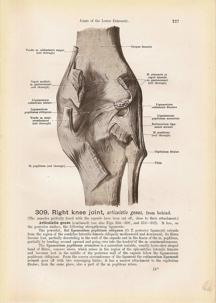 Right KNEE Joint From Behind and From the Front Black and … | Flickr