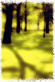 Just a Walk in the Park II | by jumpinjimmyjava