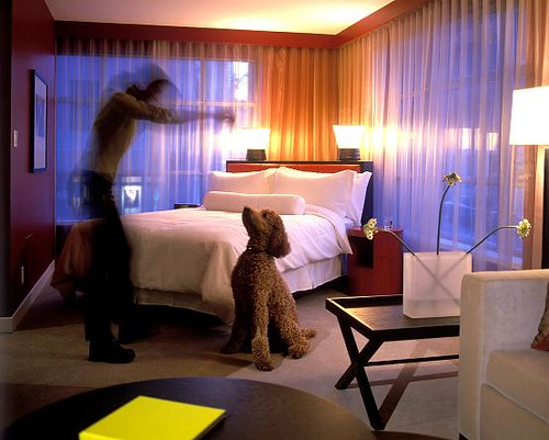 Pet Friendly Hotels Near Van Ness Ave