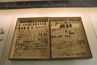 Charles Darwin's beetles collection | by Richard Carter