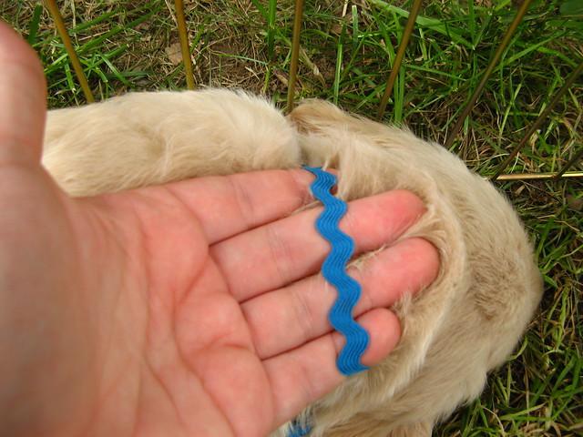 Turquoise Dog Collar Uk
