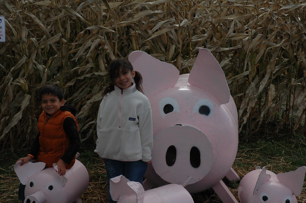 a message from the pig man essay An introduction to the pigman by paul zindel + essays critical essay #1 critical essay #2 topics for further study compare and contrast.