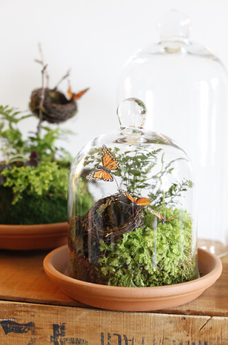 Terrariums | by Amy Merrick