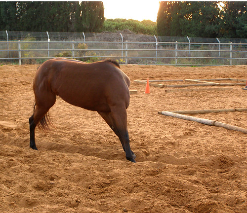 The Headless horse | Taken on a horse training ranch in
