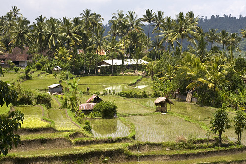 Ricefiels in Bali | by Dick Verton