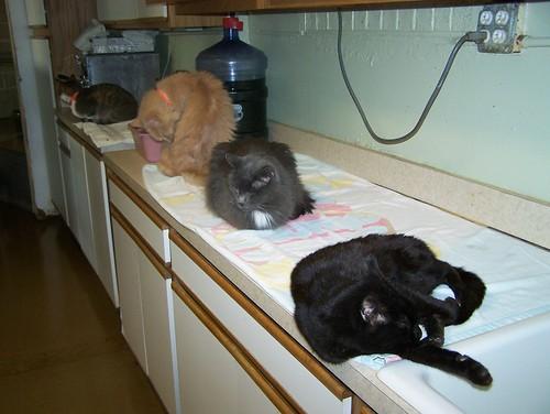 Kitchen Cats White Mountain Puzzles