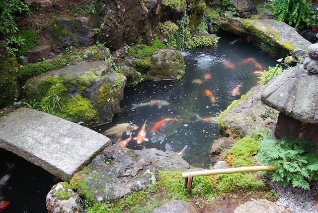 A pond of koi in a japanese zen garden oraz studio flickr for Koi pond zen
