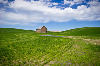 Spring in the Palouse | by Linda JP