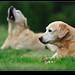 Betta's Dogs