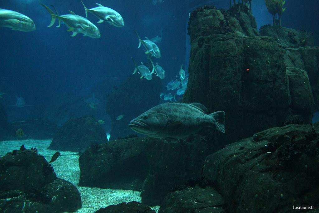 L'habitat naturel a été recréé pour que ces poissons se sentent chez eux