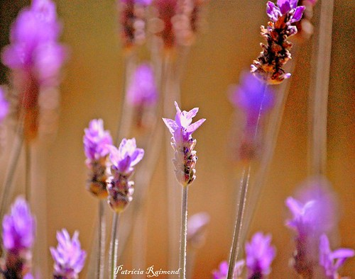 HBW | by Patrícia Raimond