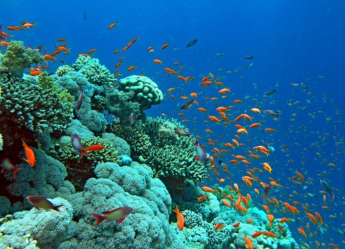 back to the Red Sea coral garden | by Zé Eduardo...
