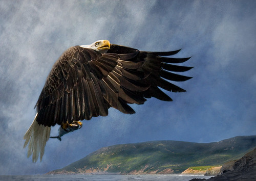Eagle Fishing | by melepix