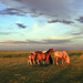 Sunset Light over the Gobi Desert