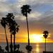 Super Palm Sunset