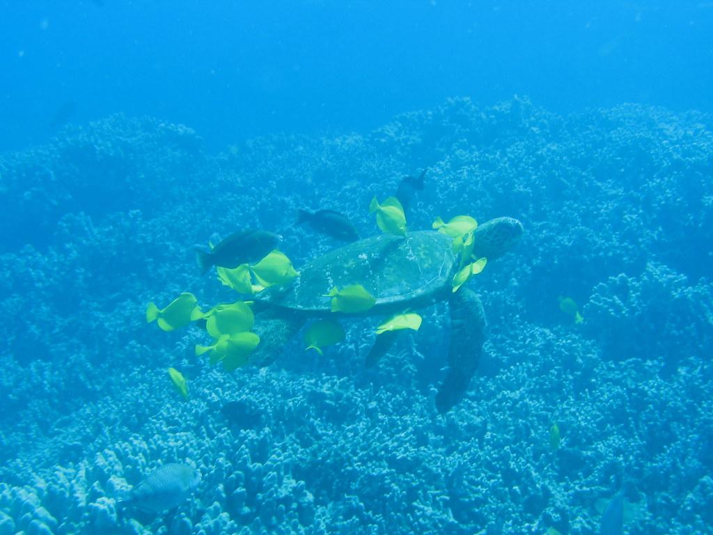 Puako Island Of Hawaii H