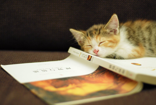reading makes me sleep~~~~ | by Lingzhi WU