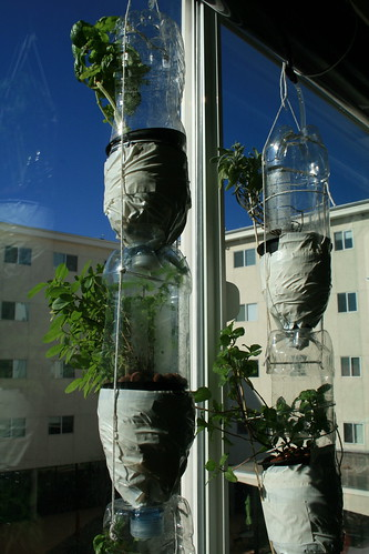 Oren Rabinowitz's Windowfarms | by Windowfarms